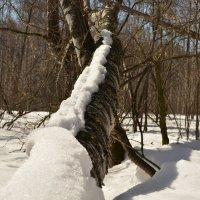Весна в лесу :: grovs