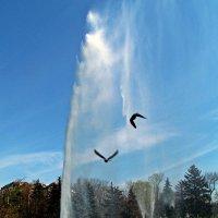 фонтан и чайки - день чудесный... :: Александр Корчемный