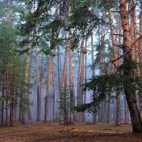 Дурманит лес апрельской влагой... :: Лесо-Вед (Баранов)