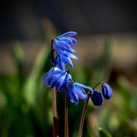 вот и к нам пришла весна... :: gribushko грибушко Николай