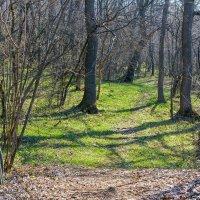 Весна в лесу :: Юрий Стародубцев