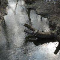 Пень над рекой :: Павел Кузнецов