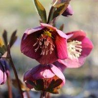 Просто Весна :: Mariya laimite