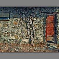 """Из серии """"Двери Окна"""" :: Ахмед Овезмухаммедов"""