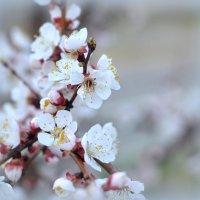 Весна :: Ринат ***