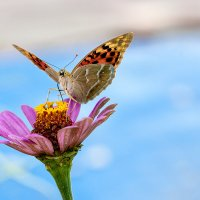 танцующая на цветке :: iGOR