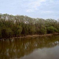 река Нара весной... :: Галина Филоросс