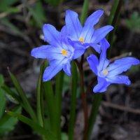Весна :: Лёха Дидус