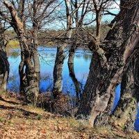 Не считая лет стоят дубы... :: Лесо-Вед (Баранов)