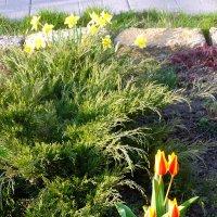 Апрель в саду... :: Тамара (st.tamara)