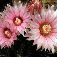 Незабываемое цветение :: LeDi WaDa