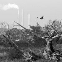 сухое дерево :: Ефим Журбин