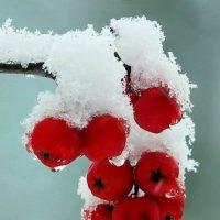 Первый снег :: Semko
