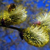 Весна. :: оля san-alondra
