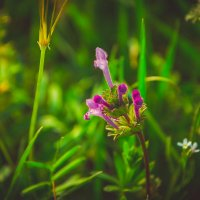 Цветочек :: Ксения Троеглазова