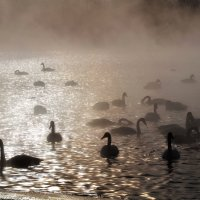 Лебединое озеро. :: Сергей Югов