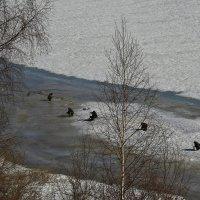 Апрельская рыбалка... :: monter-52 monter-52
