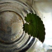 зелёный  чай :: Дмитрий Потапов