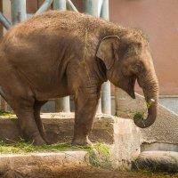 """Теперь ясно, что значит """"Доволен как слон""""! :: Алексей Кошелев"""