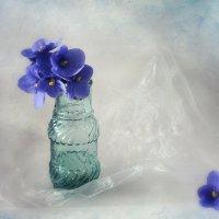 фиалки синий цвет :: Марина Торопова