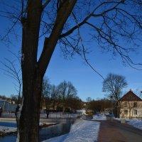 Дорожкой зимнею.. :: zoja