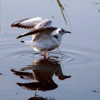 чайка :: Алина Андрейченко