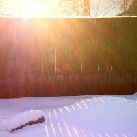 зимнее3 :: BioJ .