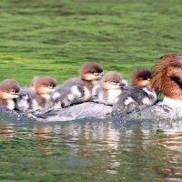 Мама и её детки :: Semko