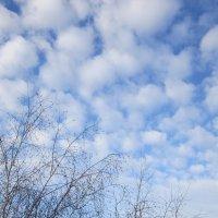 Весеннее небушко . :: Мила Бовкун
