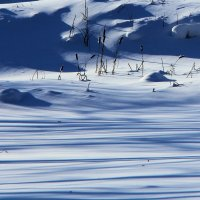 снег :: виктор ------