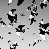 летят перелетные птицы :: Владимир Гулевич
