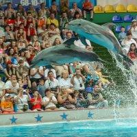 Дельфины :: Владислав Лопатов