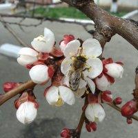 весна пришла :: Юлия Закопайло