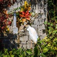 Гордая птица в чаще :: Лёша