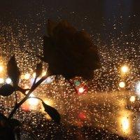 У нас дождь за окном... :: Таня Фиалка