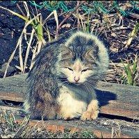 Ничья кошка. Нашел и сфотографировал Натан. :: Фотогруппа Весна.