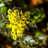Весенние первоцветы :: Нина Борисова