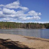Лесное озеро :: Swetlana V