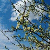 Думы о весне :: Grey Bishop