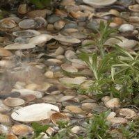 апрельский дождик  на азовском берегу :: Нади часоК