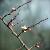 spring1904a :: yameug _