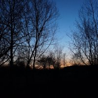 Закат среди деревьев :: Любовь Клименок