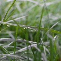 Дождь :: Елена Нор