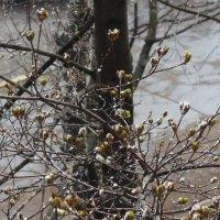 снег в апреле :: Александра
