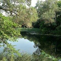 Гляжу в озера синие... :: Александр