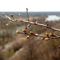 Весна :: Татьяна Баценкова