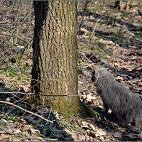 охота серой кошечки....после прогулки по лесу. :: Юрий Ефимов