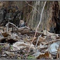 дичь для серенькой кошечки...после прогулки по лесу. :: Юрий Ефимов