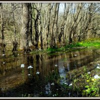 Весна :: Ирина Киршина
