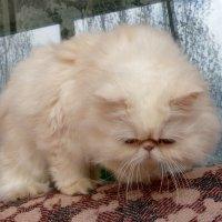 Котенька. :: Чария Зоя